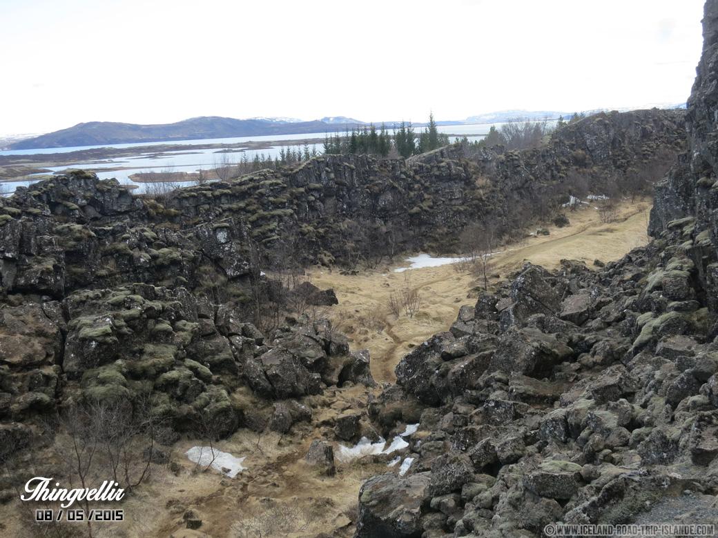 Une forêt de rochers à Thingvellir