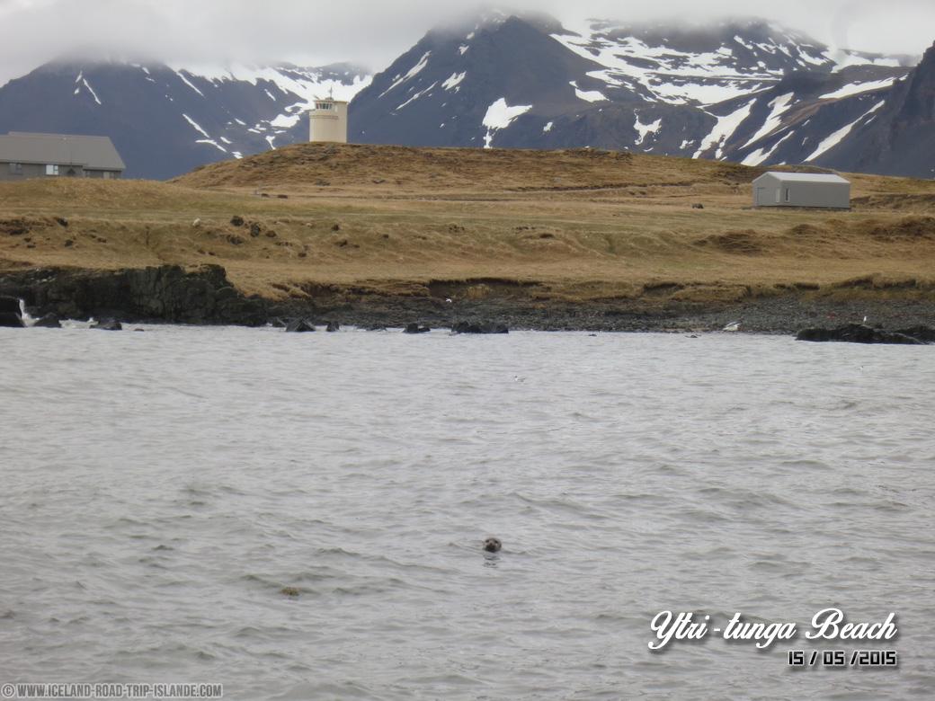 Un phoque sur la plage d'Ytri-tunga
